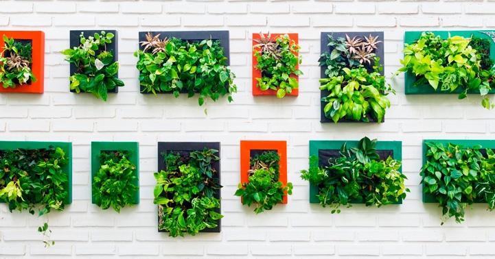 Cómo elegir las plantas del jardín vertical