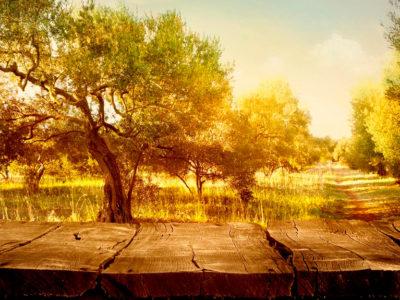 Olivo centenario el árbol de la mitología
